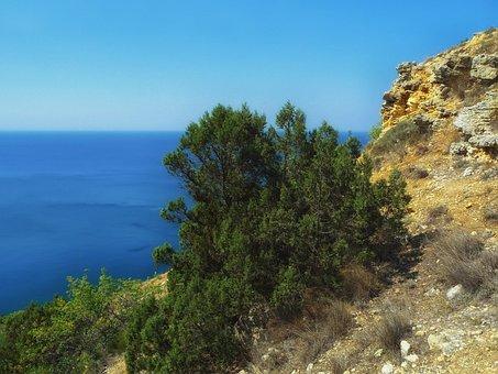 Greek Juniper, Tree, Sea, Ocean, Cliff, Nature, Outside