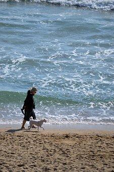 Beach, Dog, Walking, Pet, Summer, Sand, Ocean, Sea
