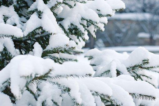 Spruce, Snow, Snowfall, Snowdrift, Snowflake