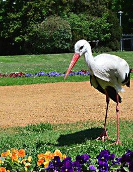 Spring, Stork, Margaret Island, Sunlight