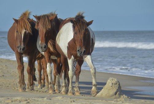 Horse, Beach, Wild, Ocean, Sea, Animal, Sand