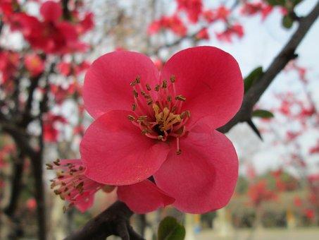 Park, Begonia, Pink, Plant
