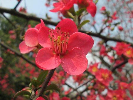Begonia, Pink, Plant