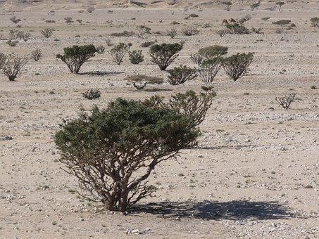 Desert, Sand, Dry, Hot, Oman, Asia, Bush, Pebble, Scree