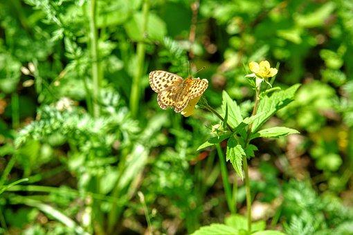 Butterfly, Fauna, Flora, Baikalsee, Baikal, Lake