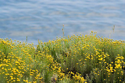 Sea, Green, Flowers, Yellow, Costa, Liguria, Summer