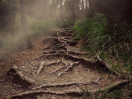 Path, Roots, Mountain, The Haze, Forest, Horror, Nature