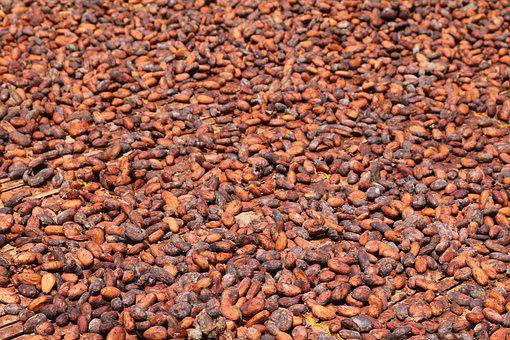 Cocoa Beans, Africa, Ghana, Dry, Cocoa, West Africa