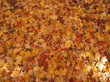 Autumn, Fallen Leaves, Fall, Seasons, Leaves, Leafy