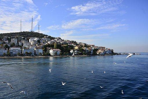 Princes' Islands, Marmara Sea, Istanbul, Birds