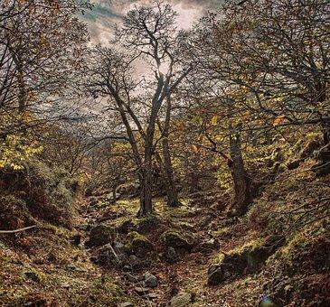 Sirikari, Autumn, September, Nature, Season