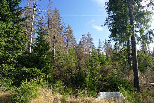 Waldsterben, Reafforestation, Contrasts, Live, Death