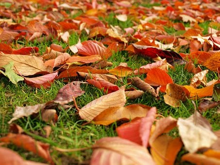 Leaves, Fall, Autumn, Grass, Ground, Groundcover, Red