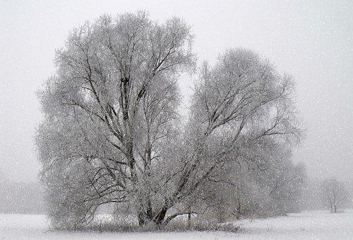 Time Of Year, Winter, Tree, Snow, Frozen, Sport