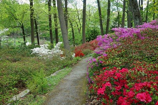Arboretum, Devon, Pennsylvania, Flowers, Path, Trees