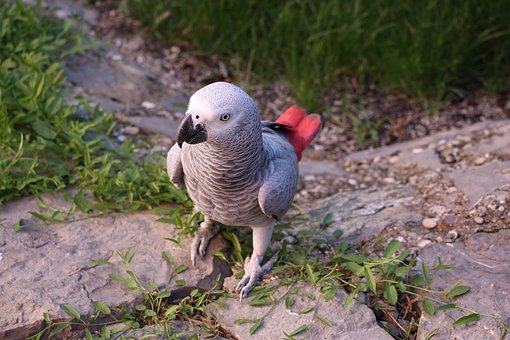 Parrots, žako, Bird, Animal, Pet, Natural