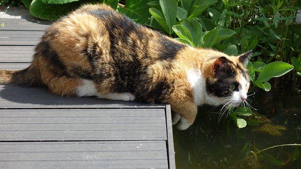 Cats, Cat, Pet, Lapjeskat, Animal, Mammal, Hunting