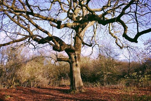 Tree, Autumn, Nature, Season, Fall, Yellow, Forest