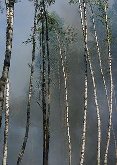 Fire, Conservation, Burning For Conservation, Båtfors