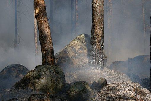 Forest Fire, Båtfors, Fire, Ash, Smoke, Burning