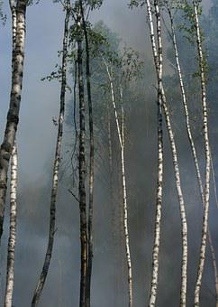 Fire, Conservation, Burning For Conservation, Båtfors