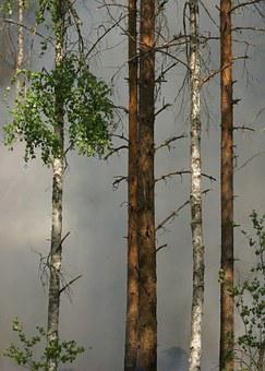 Forest Fire, Forest, Fire, Conservation, Båtfors