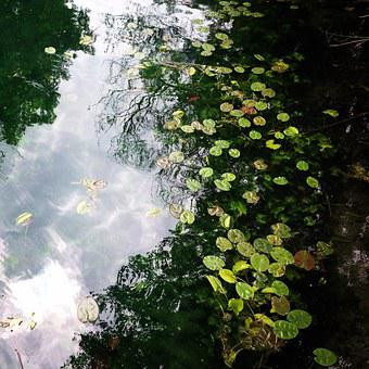 Water, Creek, Nature, Forest, Lilypads