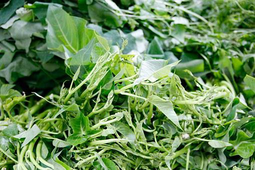 Salad, Vegetables, Nutrition, Eat, Food, Vitamins