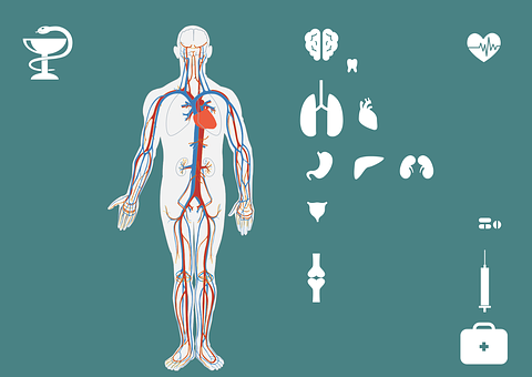 Medical, Icon Set, Body, Brain, Lung, Heart, Stomach