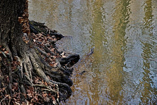 Joist, Staříč, Borovany, River, At The Mill