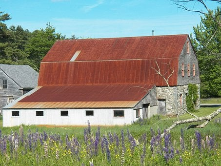 Stone Barn, Barns, Farm, Farmhouse, Farm Yard, Lupines
