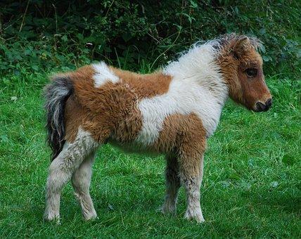 Pony, Animal, Cute, Dartmoor, Devon