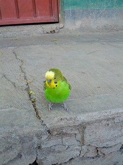 Parrot, Cotorro, Animal, Wild, Birds, Nature, Small