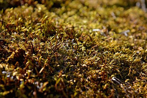 Moss, Plant, Green, Fouling, Nature, Close, Moss Carpet
