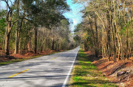 South Carolina, Landscape, Scenic, Road, Highway