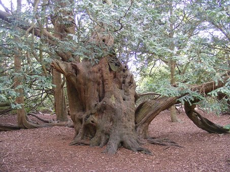 Yew Tree, Old, England, United Kingdom, Langley Park