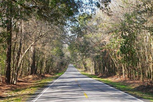 South Carolina, Country, Countryside, Nature, Outside