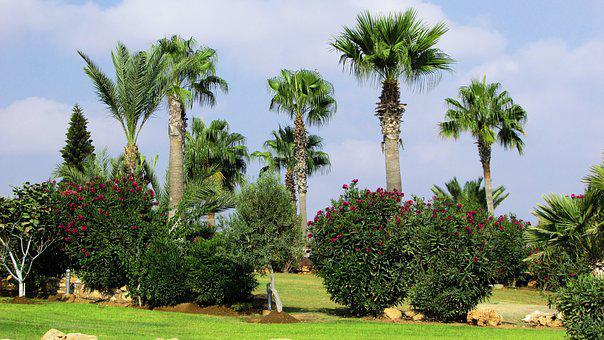 Garden, Trees, Palms, Plant, Green, Grass, Cyprus