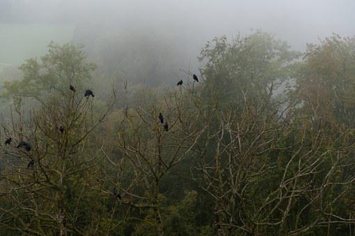 Crow, Forest, Fog, Trees, Bird, Nature, Green, Weird