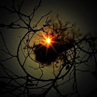 Aesthetic, Tree, Round, Sun, Nest, Kahl, Sky, Birds