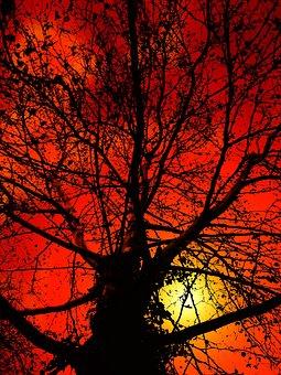Tree, Kahl, Aesthetic, Sky, Winter, Crown, Winter Sun
