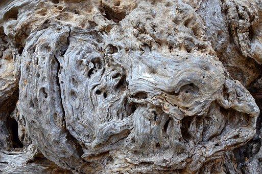 Beach Wood, Drift Wood, Root, End Grain