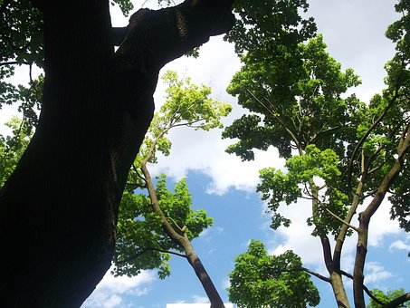 Trees, Sky, Nature, Green, Environment, Forest, Leaf