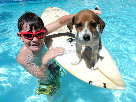Father's Day, Fun, Surfing, Doggy, Puppy, Playful