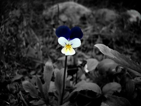 Flower, Black And White, Color Accent, Floral, Nature