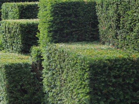 Green, Hedge, Topiary, Garden, Bush, Orthogonal