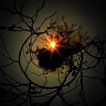 Aesthetic, Tree, Round, Sun, Nest, Kahl, Sky, Birds