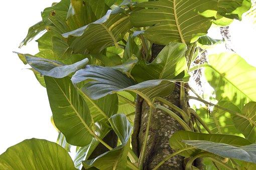 Vine, Leaves, Sunlight, Sun, Plant, Leaf, Tree, Nature