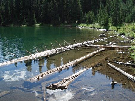 Drift Wood, Water, Logs