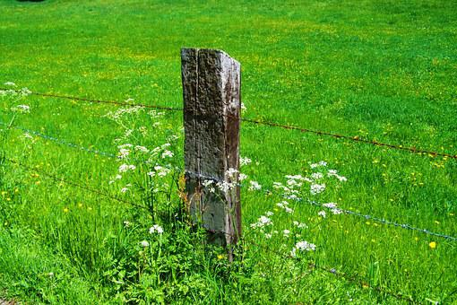Old Wood Columns, Rusted Wire Fence, Green Pastures